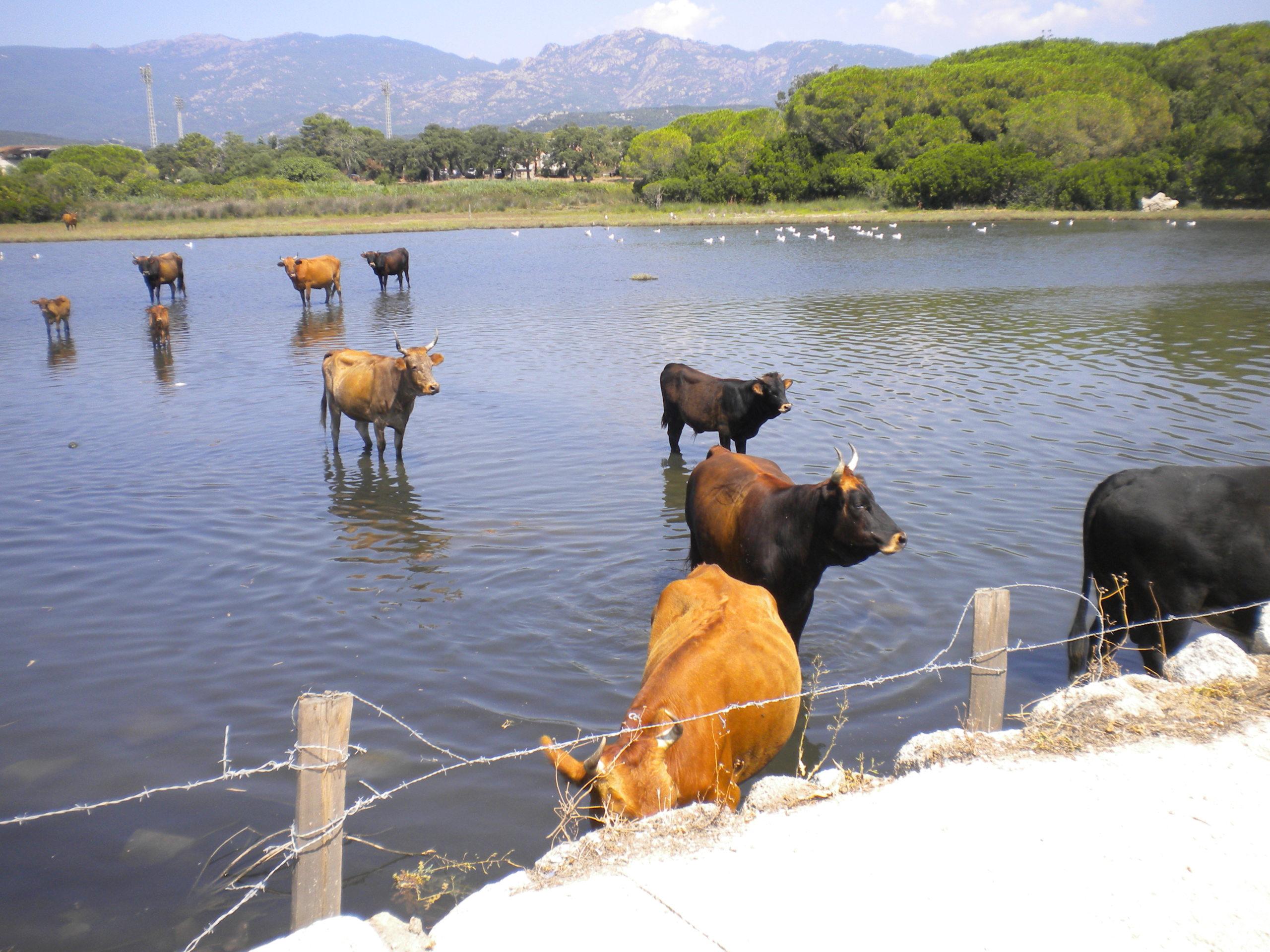 piscine pour vaches!!!! Dscn4519