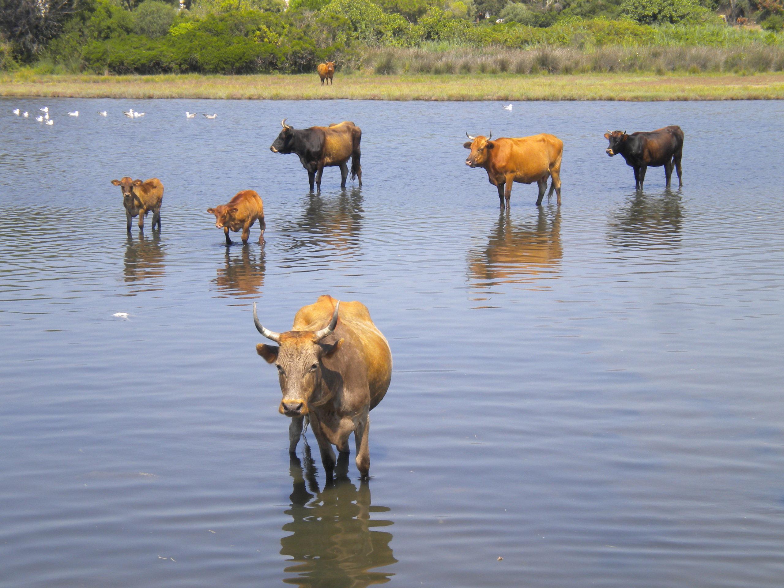 piscine pour vaches!!!! Dscn4521