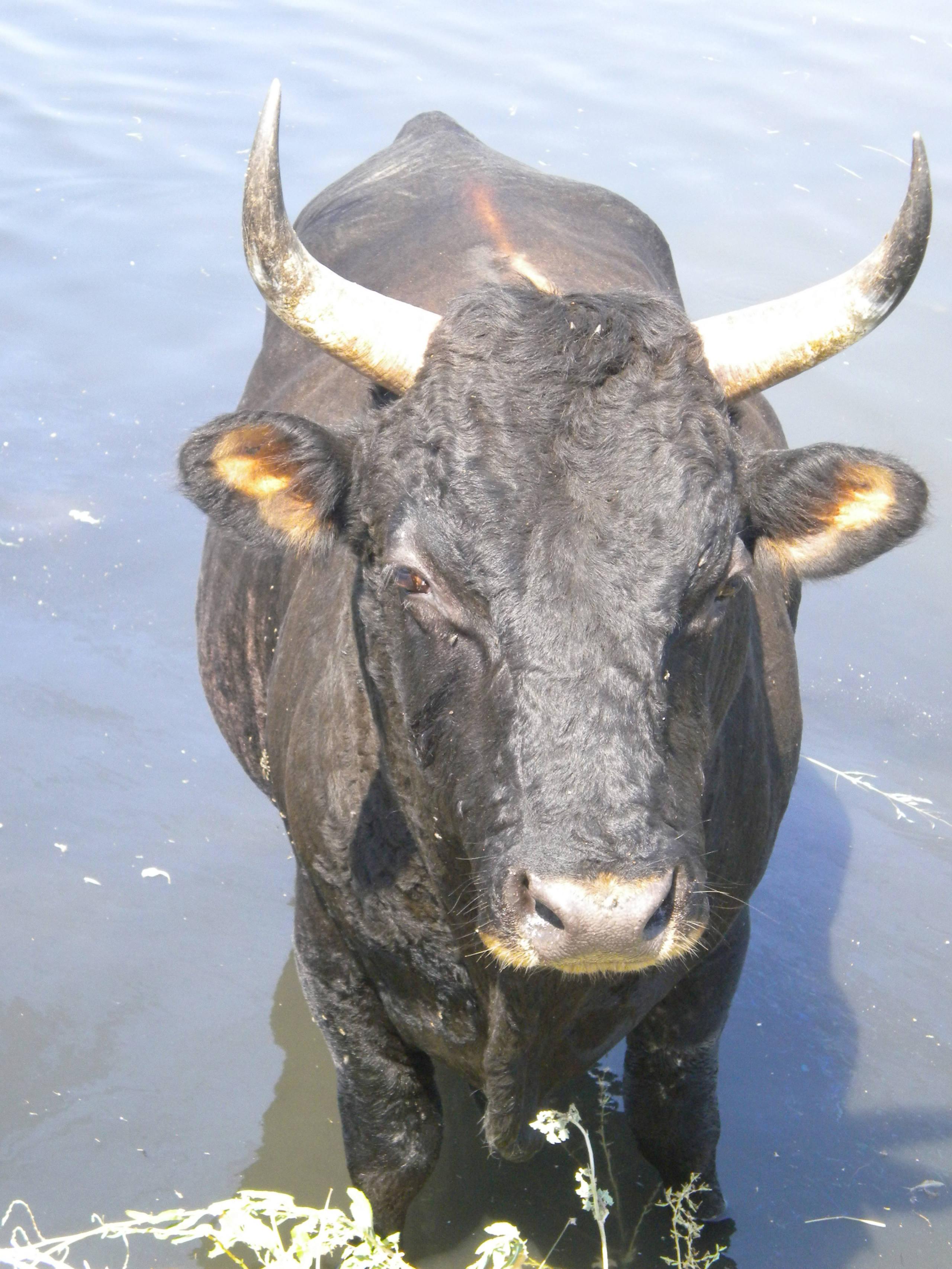 piscine pour vaches!!!! Dscn4522