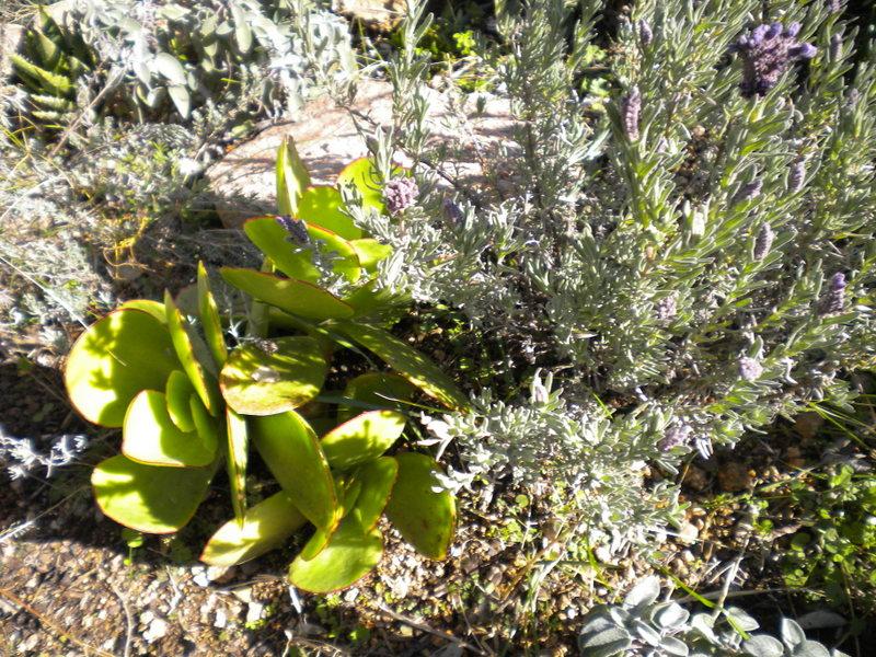 """petit tour au """"jardin"""" Dscn5015"""