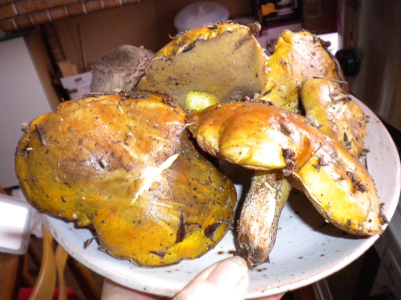 champignons Dscn5610