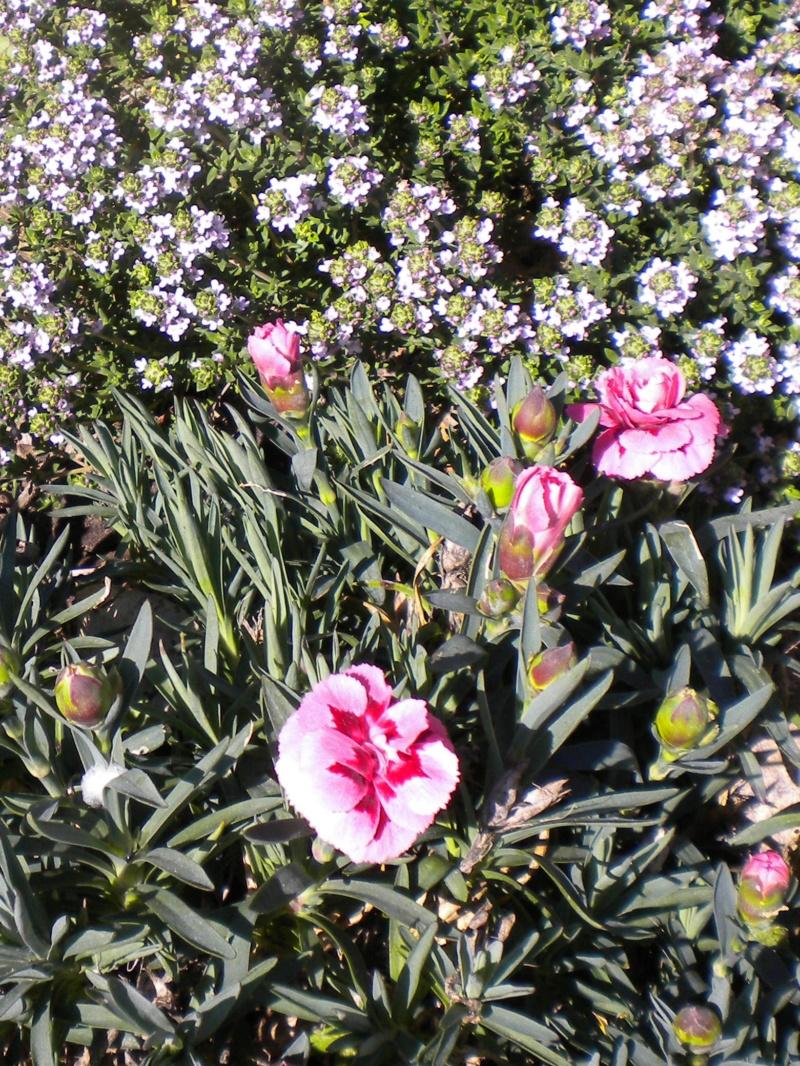 petite sortie au jardin Dscn5839