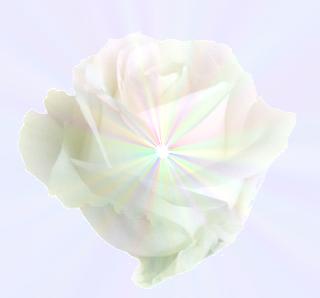 La Voie solaire Rose10
