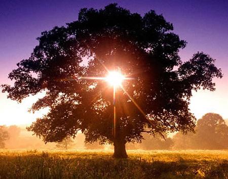 Un point sur la Voie solaire Sun_in10