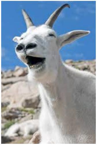 Mnt Goat News Brief 6/13/18 Screen12