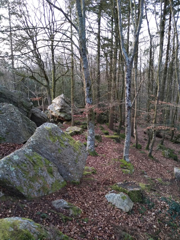 spot 35 forêt de st Aubin du Cormier. Img_2048