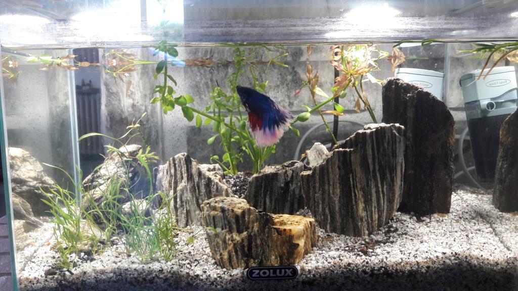 Aquarium 120L  20190710