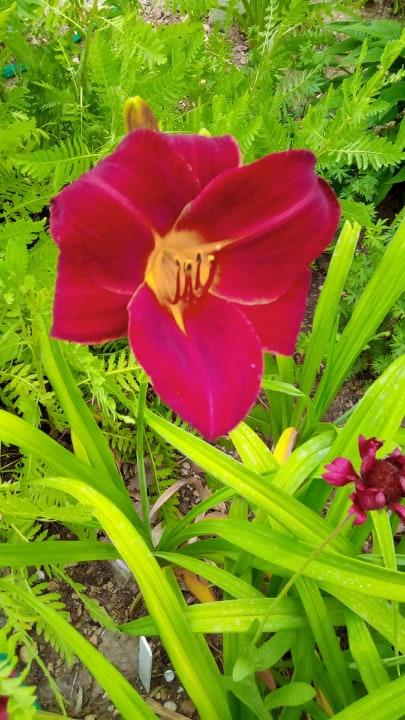 Iris en situation, dans les jardins 10381010