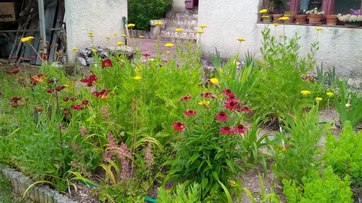 Iris en situation, dans les jardins 10411210