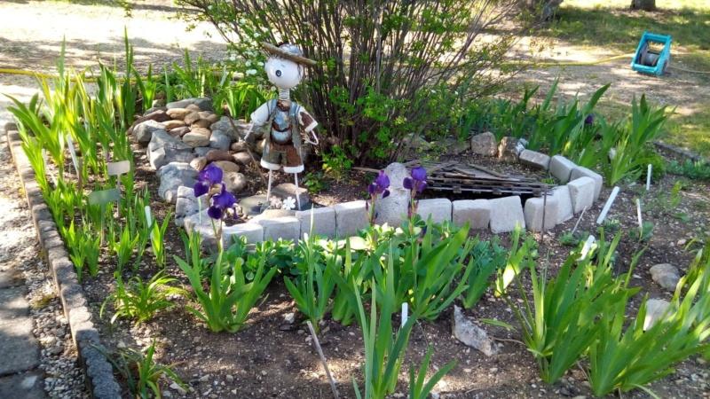 Iris en situation, dans les jardins 19_avr12