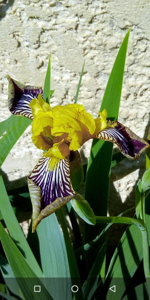 Iris différents des autres 3_mai_10