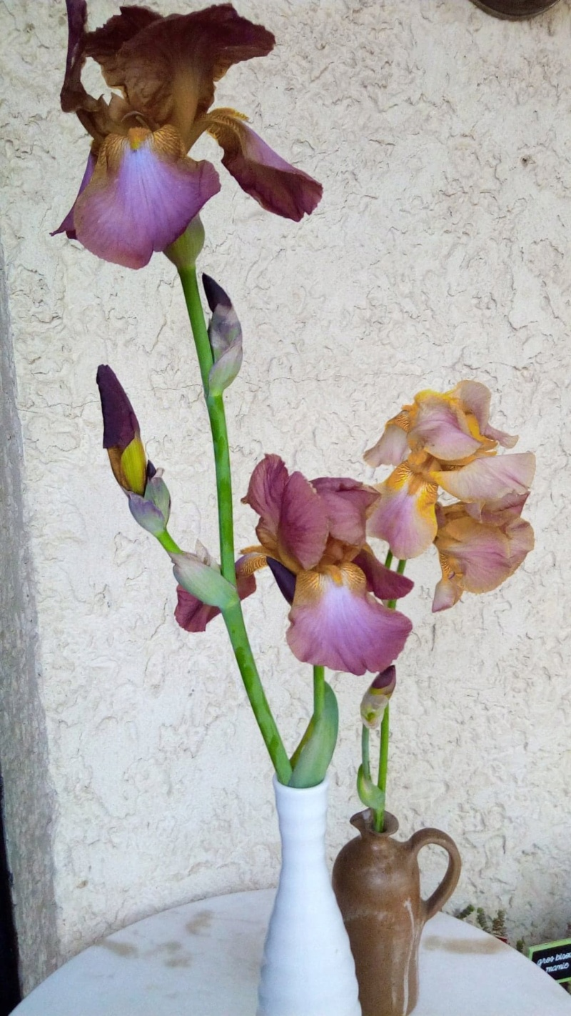 Autre iris rose plus foncé que Easter Bonnet 617