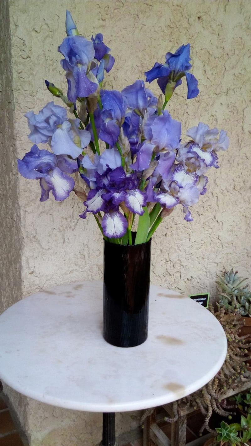 Iris bleu sombre barbe bleue , à identifier Bouqet10