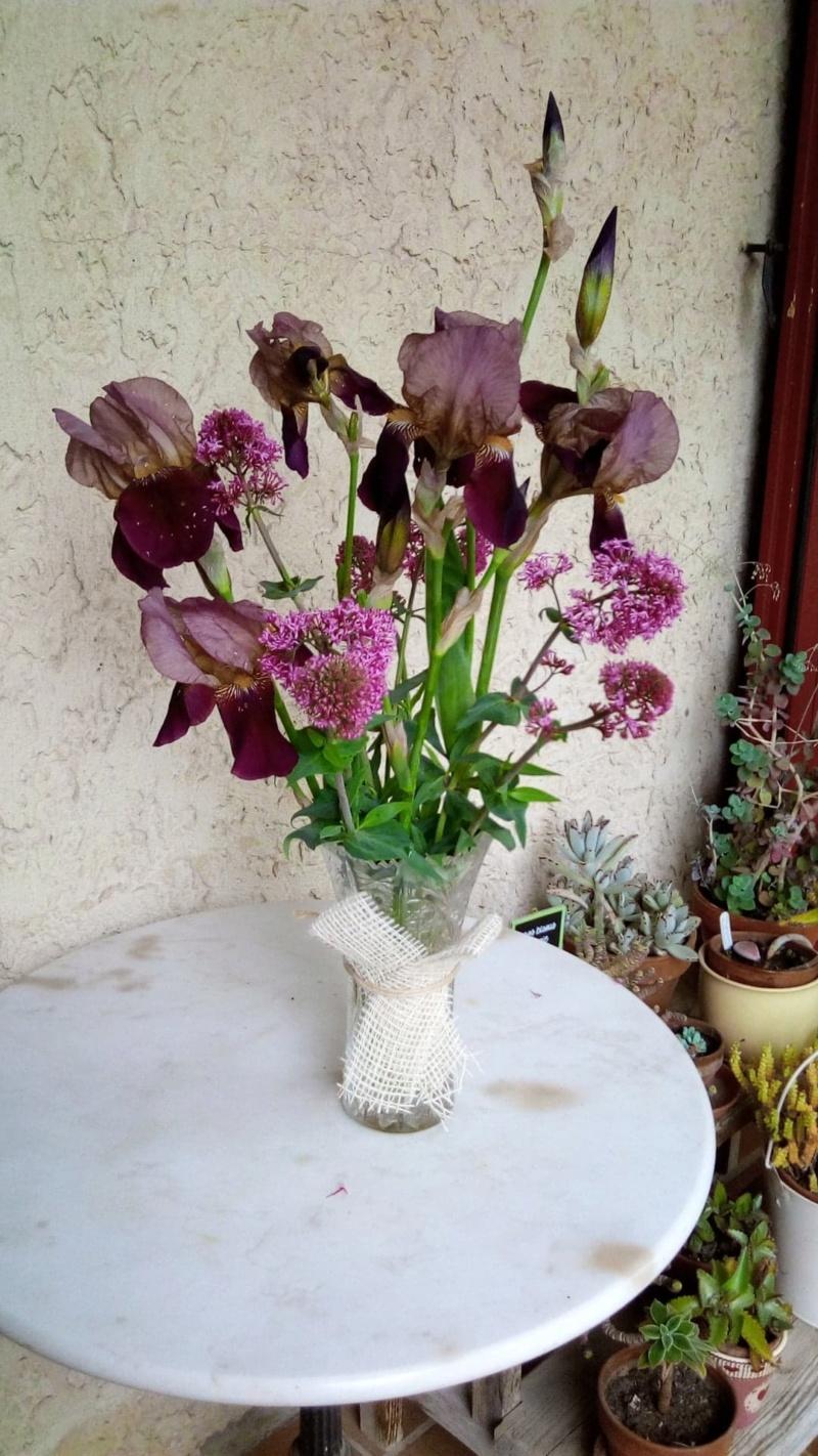 Iris bleu sombre barbe bleue , à identifier Bouque10