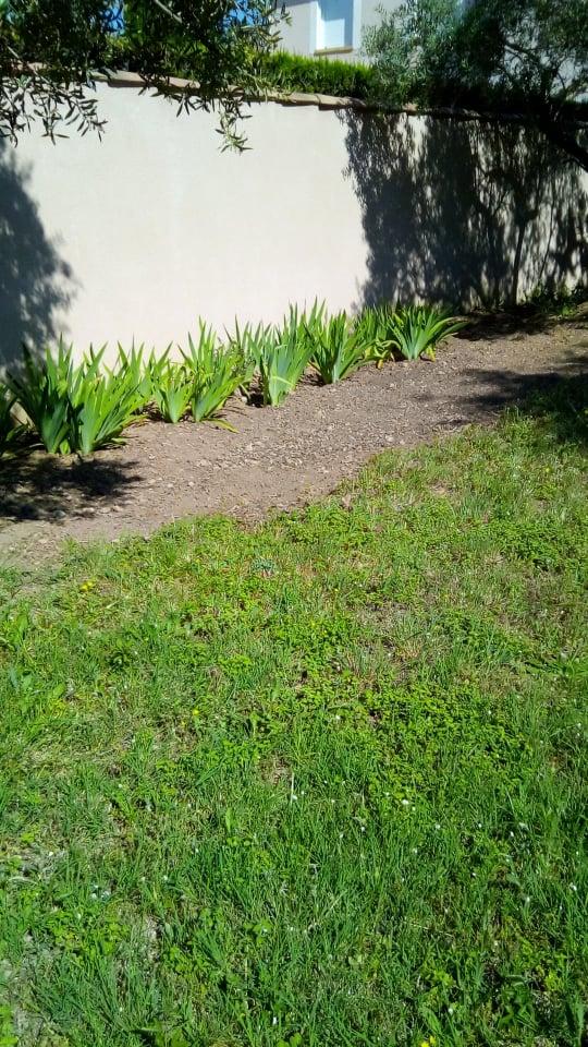 Iris en situation, dans les jardins En_prz11