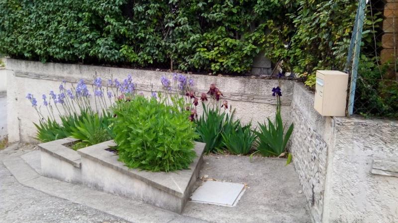 Iris en situation, dans les jardins Entrzo10