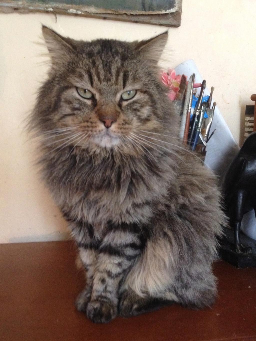 collecte Leetchi au profit de Léo, chat atteint d'une maladie auto-immune Leo_210