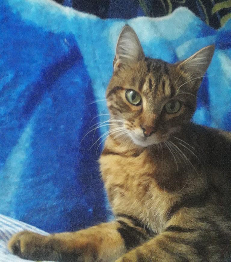 Paris, Noisette, jeune chat tigré cherche famille d'adoption/Région Parisienne Noiset11