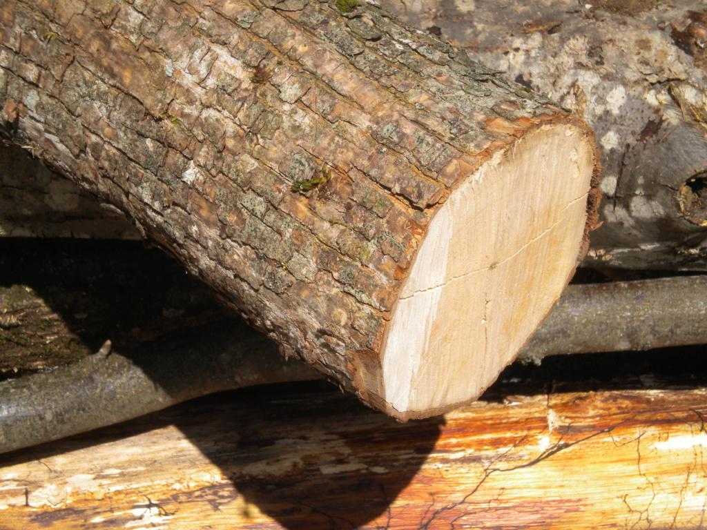 che legno è? Dscn0318
