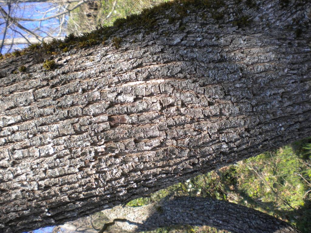 che legno è? Dscn0319