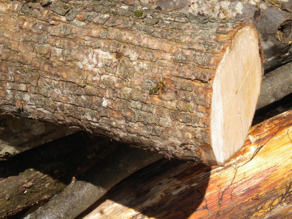 che legno è? Dscn0321