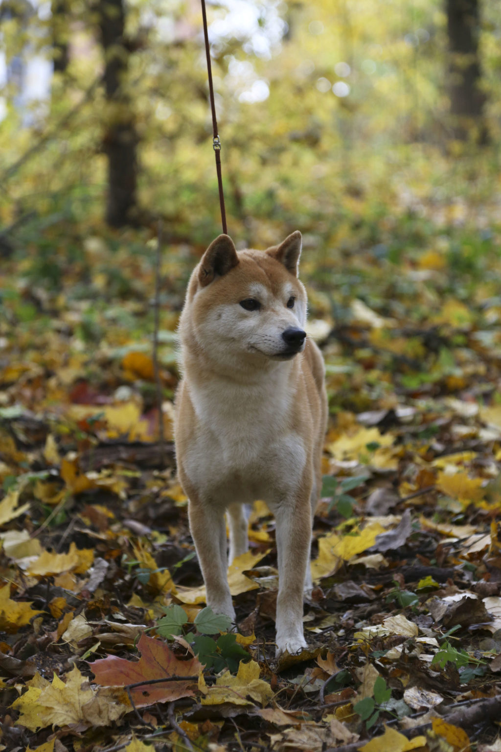 SHITONUBA AKARUMEY 0d9a3510