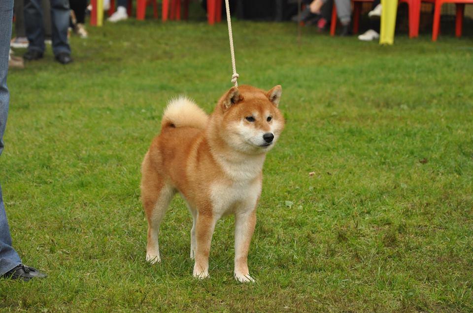 щенок в питомнике Юкаси 21558611