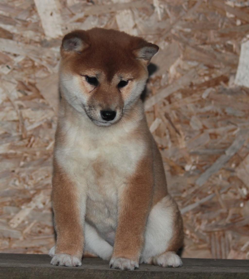 щенок в питомнике Юкаси 59273910