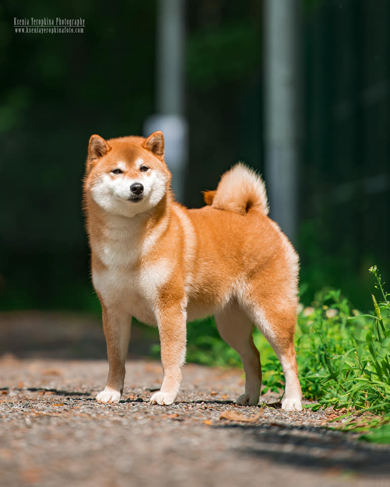 KAZAKOSHI NO WAKAMIE GO YOKOHAMA ATSUMI - Страница 4 __aa10