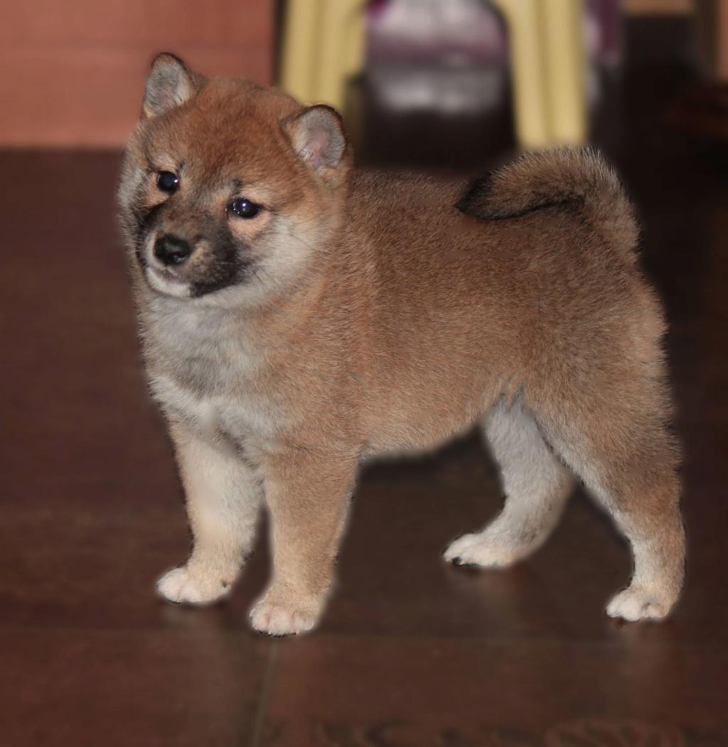 щенок в питомнике Юкаси _a__a10