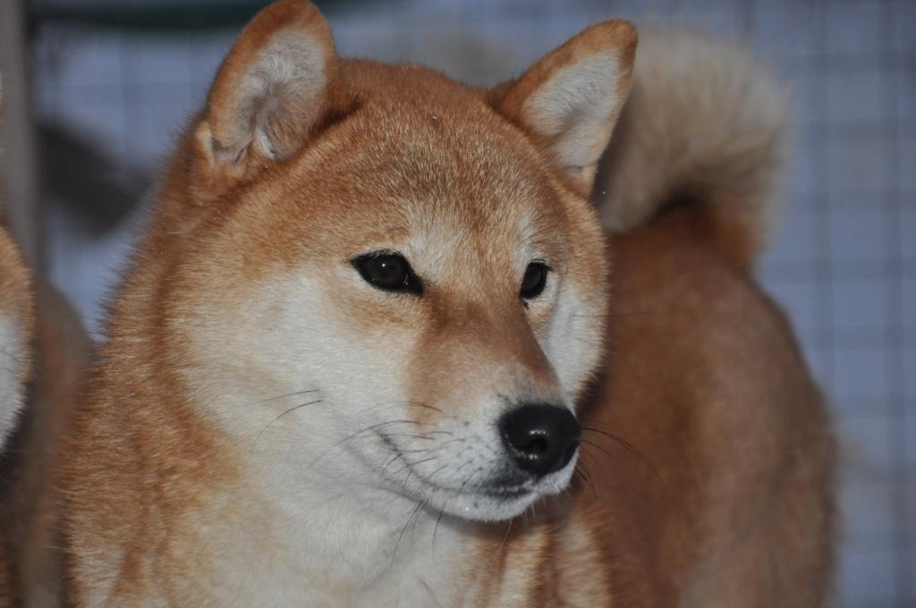 щенок в питомнике Юкаси Dsc_0036