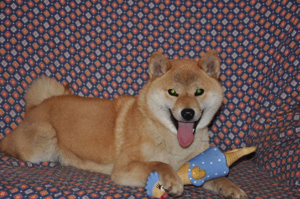 щенок в питомнике Юкаси Dsc_0066