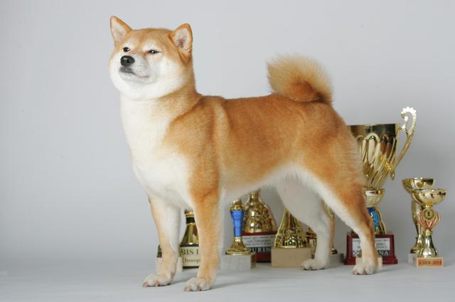 щенок в питомнике Юкаси Ea11