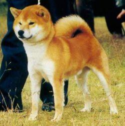 щенок в питомнике Юкаси Ei15