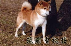 INISHIE NO HANATORA GO SHIBASAIMURA Tetsun11