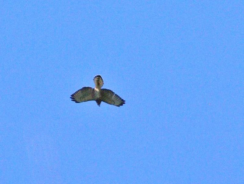 aide pour identifier plusieurs oiseaux  33122310