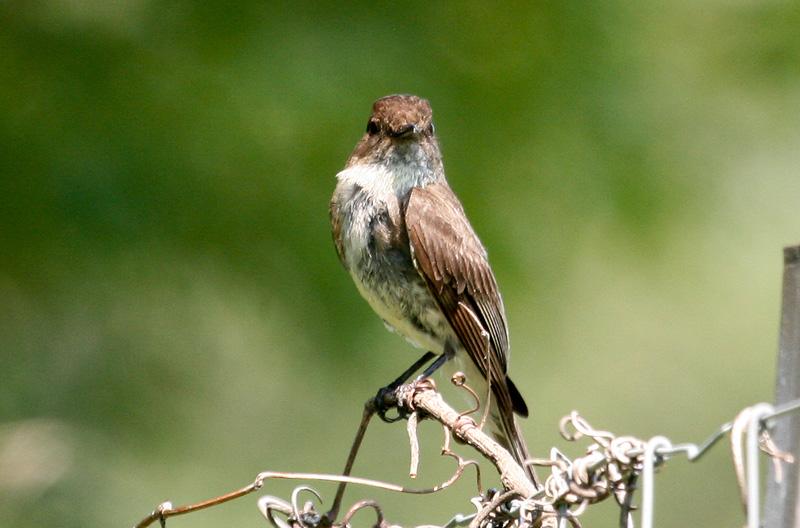 Pouvez-vous m'aider a identifier cet oiseau Img_3510