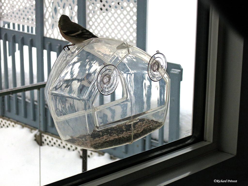 Mangeoire de fenêtre  Mangeo11