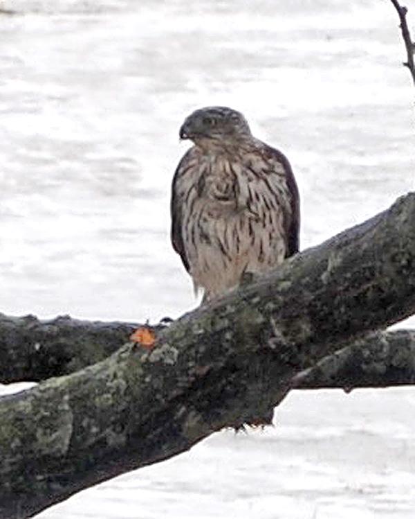 Petite visite Oiseau13