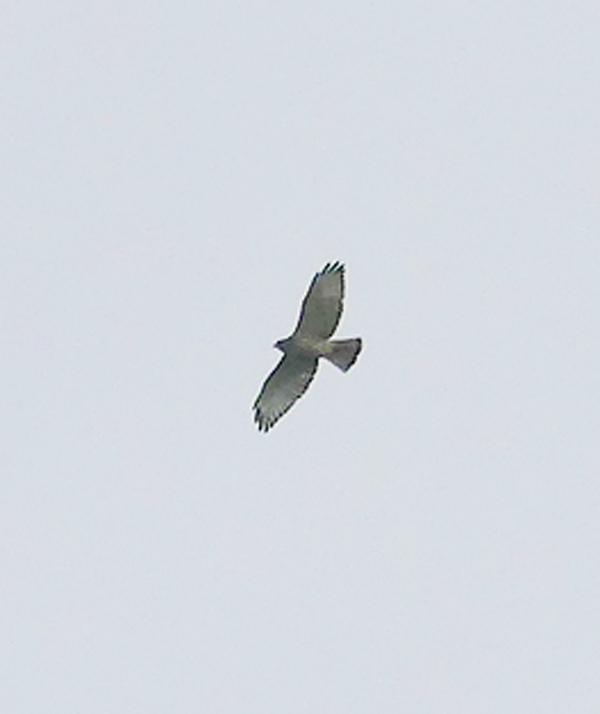 2 oiseaux à identifier P1520310