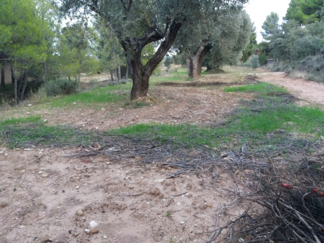 ¿Cómo incrementar el contenido en materia orgánica del suelo? 20181013