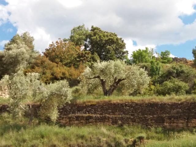 Precio Aceite de Oliva: evolución del mercado - Página 3 20190516