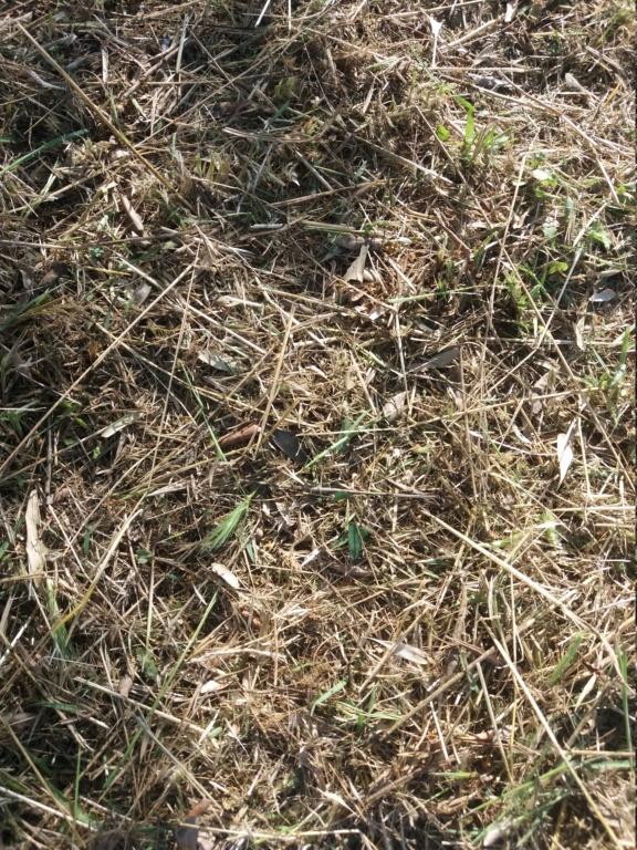¿Cómo incrementar el contenido en materia orgánica del suelo? - Página 2 20210611