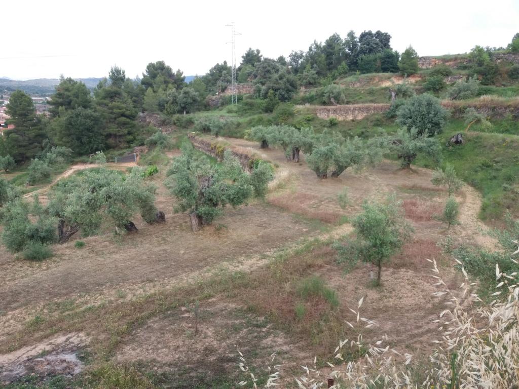 ¿Cómo incrementar el contenido en materia orgánica del suelo? - Página 2 20210612