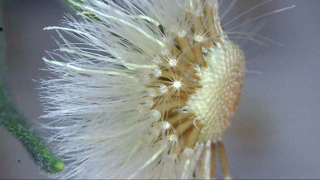 ¿Alguien sabe el nombre de esta hierba? Snap_026