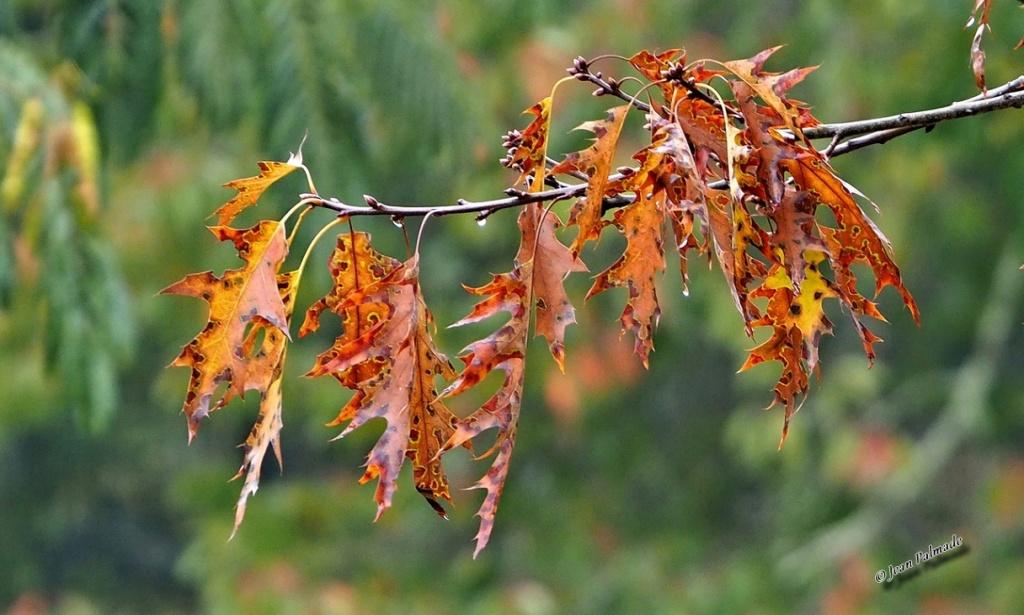 Images d'automne Pa080011