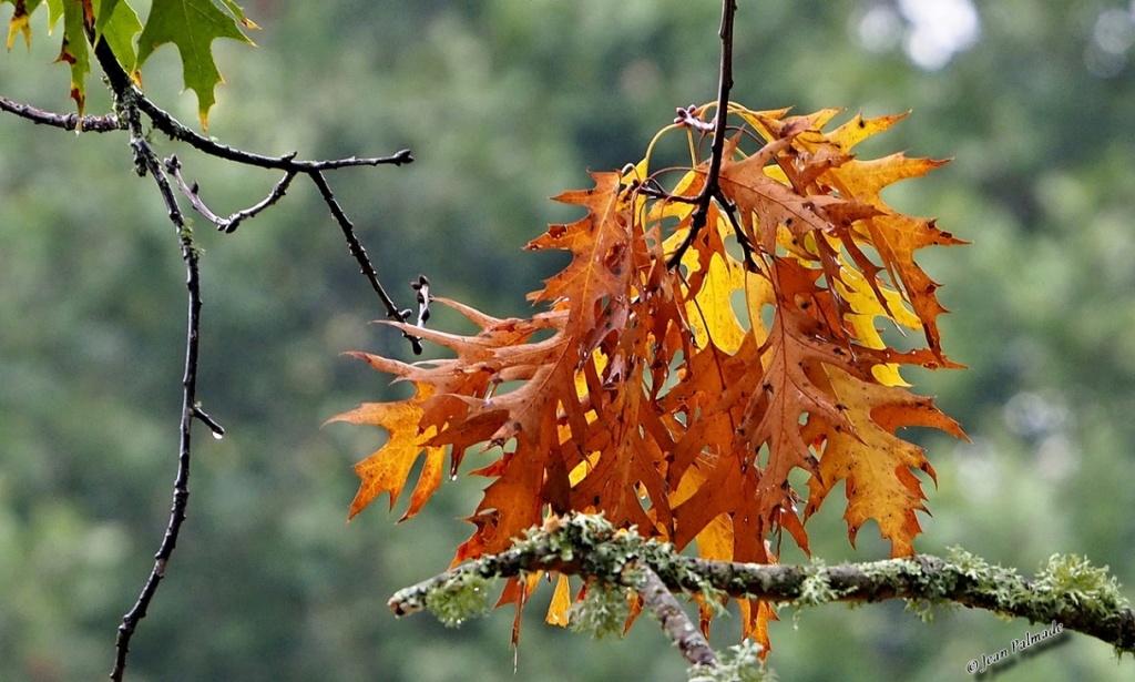 Images d'automne Pa080012