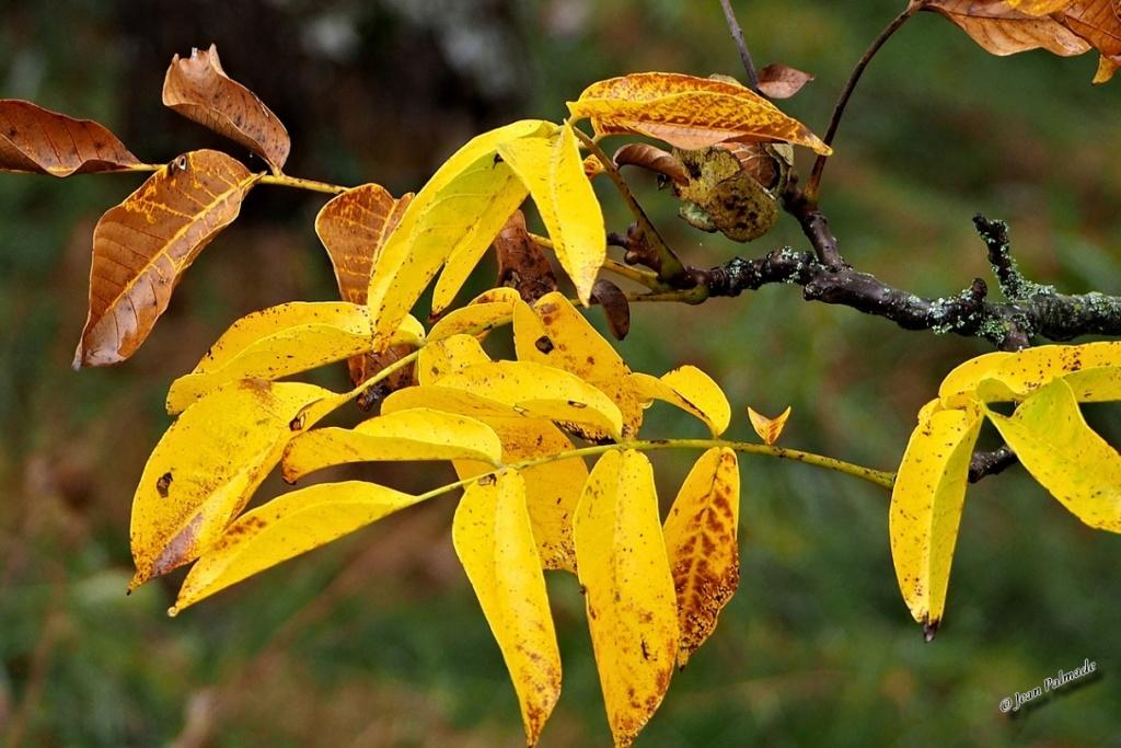 Images d'automne Pa080013