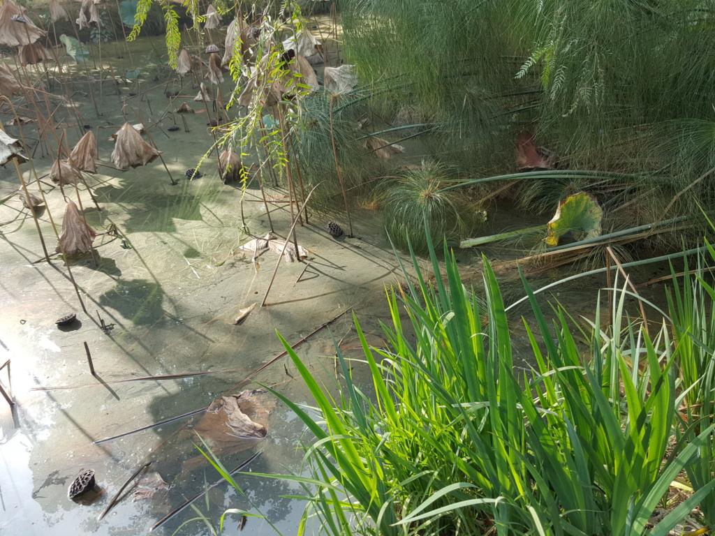 Egypte Orman Botanic Garden 20181110