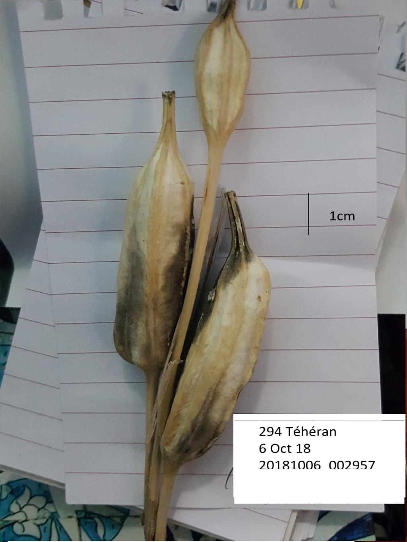 Identification 294_tz10
